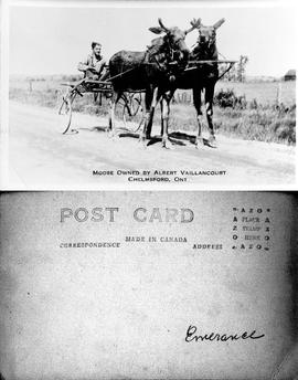 Moose Owned by Albert Vaillancourt, Chelmsford, Ont. - Post Card - Emerance